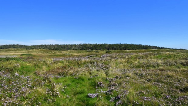 Boggy meadow with wildflowers, Coastal Trail, Brier Island Nature Preserve, Nova Scotia, Canada