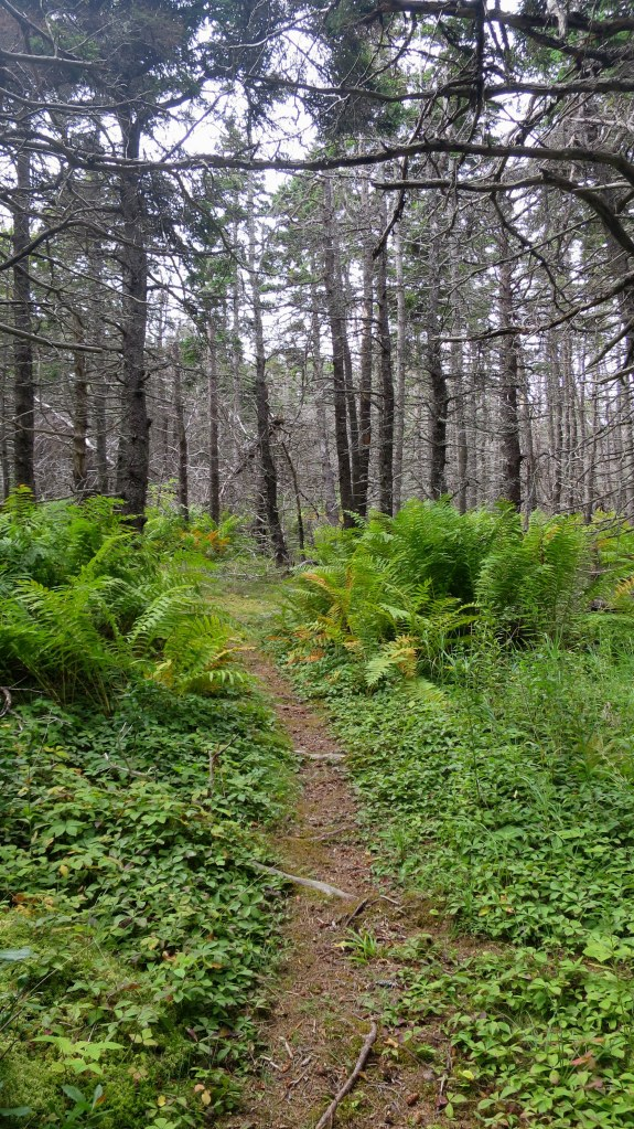 Beginning of Western Coastal Trail, West Mabou Beach Provincial Park, Nova Scotia, Canada