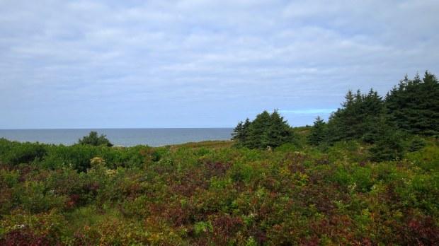 Meadows along Cnoc na Smuain Trail, West Mabou Beach Provincial Park, Nova Scotia, Canada