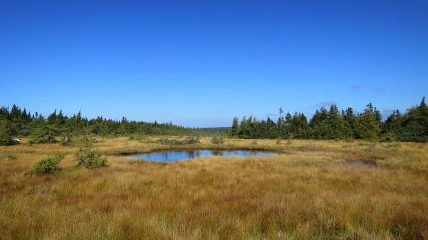 French Mountain Bog Trail, Cape Breton Highlands National Park, Nova Scotia, Canada