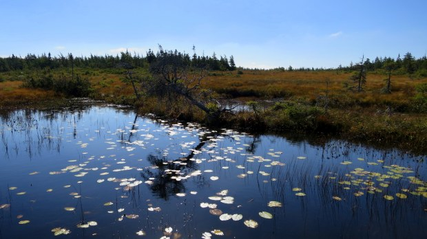 French Mountain Bog Trail, Cape Breton Highlands National Park, Nova Scotia, Canada