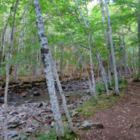 Cape Breton Highlands National Park, Part 3: MacIntosh Brook Trail and Lone Shieling