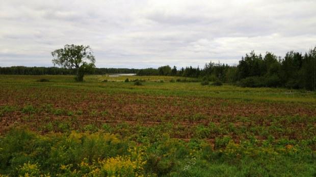 Fields, Prince Edward Island, Canada