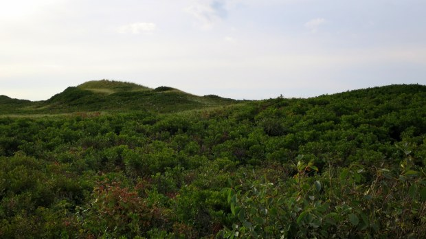 Rolling dunes of Greenwich Beach, Prince Edward Island National Park, Prince Edward Island, Canada