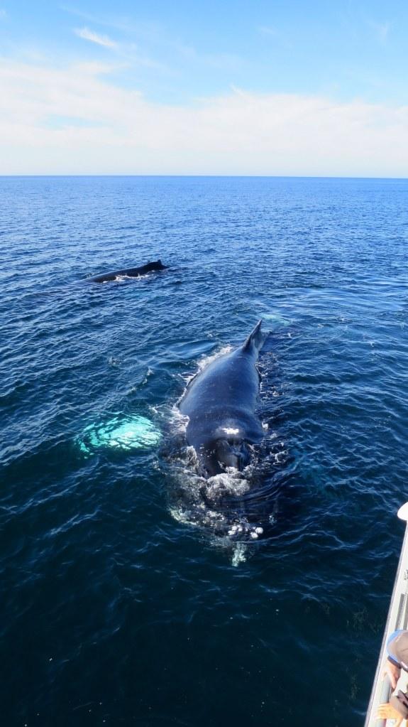 Coming in closer, Bay of Fundy, Nova Scotia, Canada