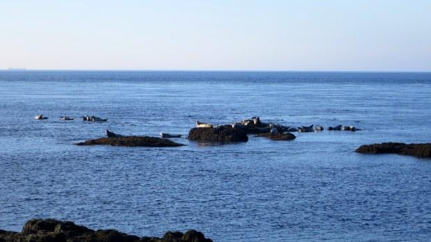 More seals, Coastal Trail, Brier Island, Nova Scotia, Canada
