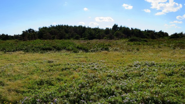 Meadow behind sandstone cliffs, Brackley-Dalvay, Prince Edward Island National Park, Prince Edward Island, Canada