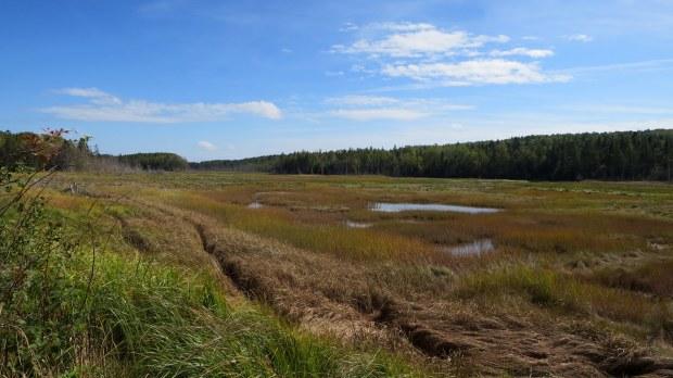 View from Cheverie Salt Marsh Trail, Cheverie Salt Marsh, Cheverie, Nova Scotia, Canada
