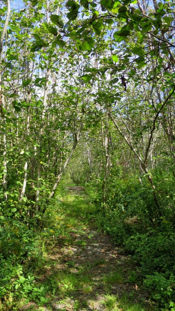 Cheverie Salt Marsh Trail, Cheverie Salt Marsh, Cheverie, Nova Scotia, Canada