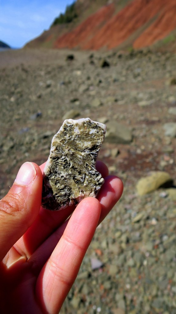 Fossilized plants with quartz vein underneath, Five Islands Provincial Park, Nova Scotia, Canada