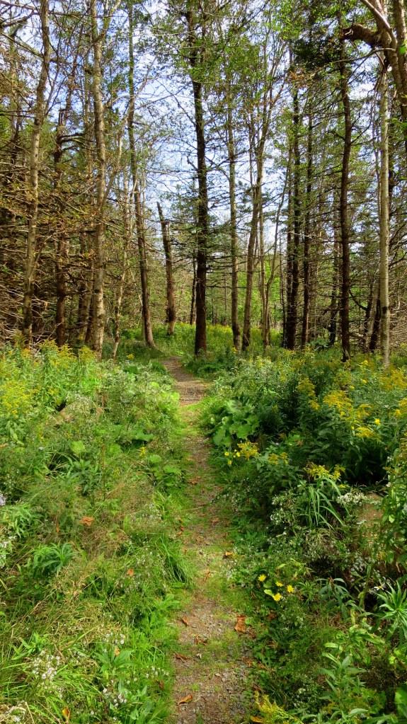 Pretty though fairly nondescript Red Head Trail, Five Islands Provincial Park, Nova Scotia, Canada