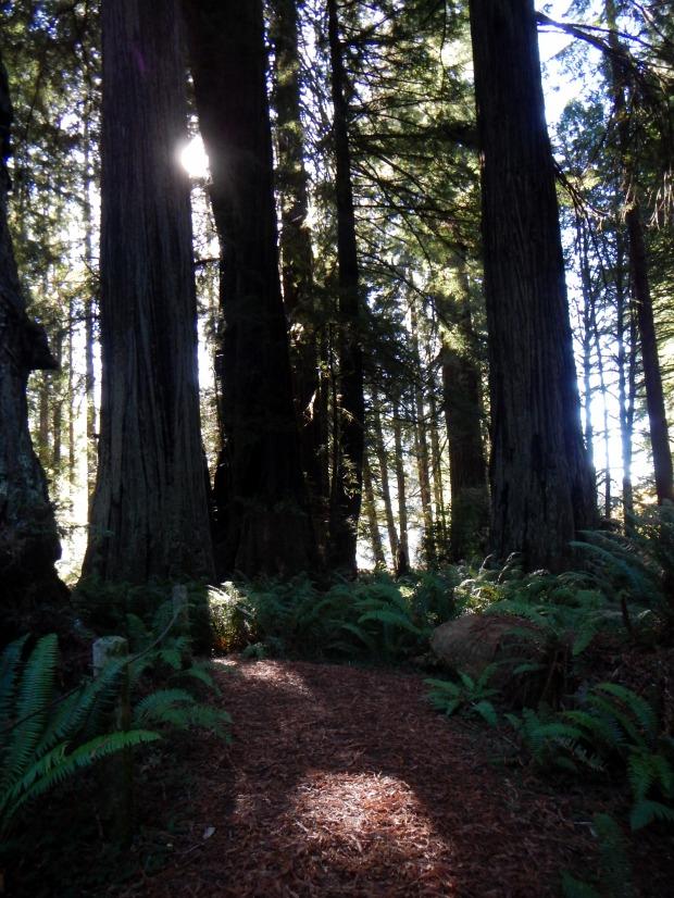 West Ridge Trail, Prairie Creek Redwoods State Park