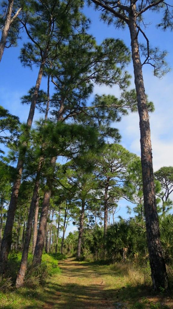 Osprey Trail, Honeymoon Island State Park, Florida
