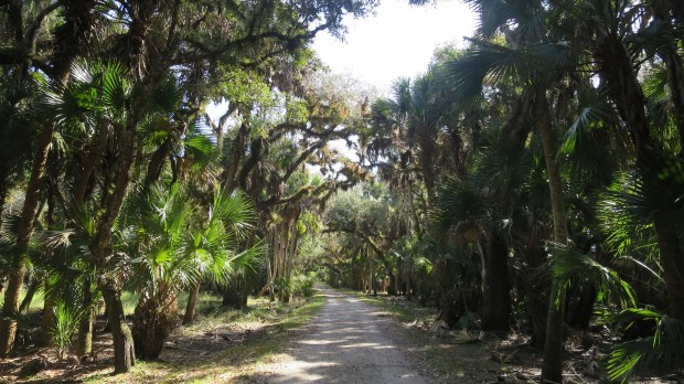 Ranch House Road Trail, Myakka River State Park, Florida