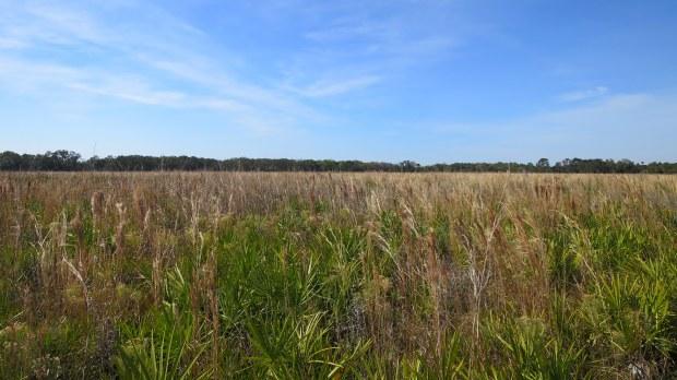 Prairie habitat, Myakka River State Park, Florida