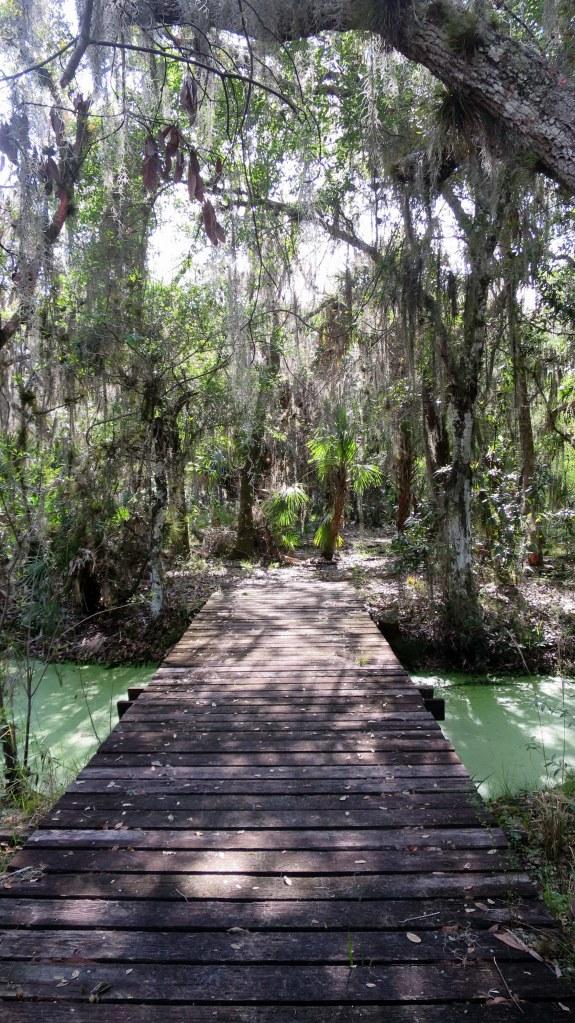 Wetland, Myakka River State Park, Florida