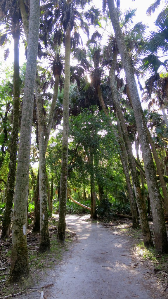 Boylston Nature Trail, Myakka River State Park, Florida
