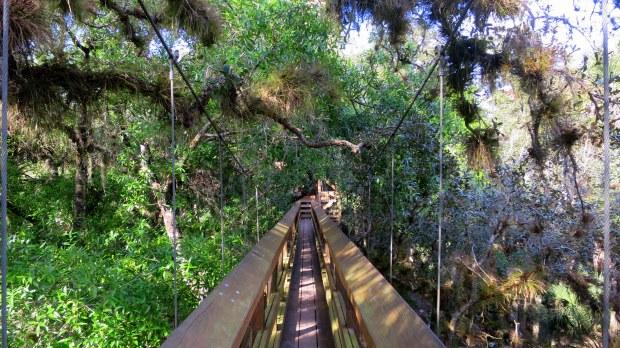 Canopy Walk, Myakka River State Park, Florida