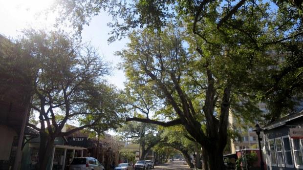 Live oaks on Main Street, Ocean Springs, Mississippi
