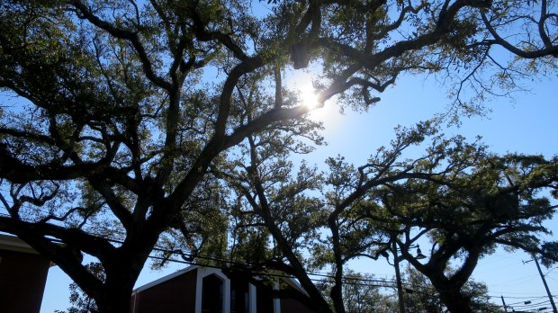 Live oaks on Main Street, Ocean Springs, Mississippi