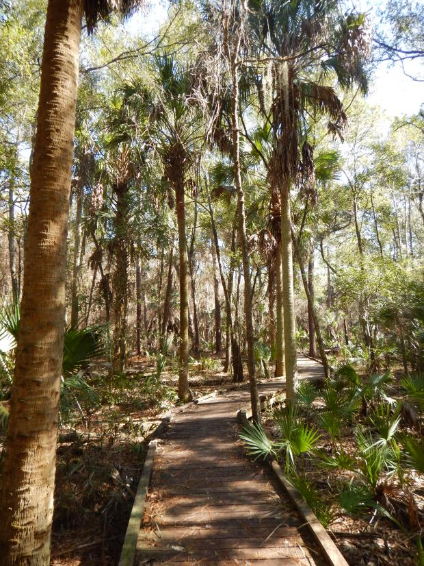Churchhouse Hammock Trail, Crystal River Preserve State Park, Florida
