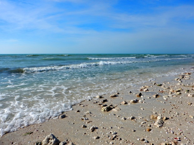 Honeymoon Island State Park, Florida