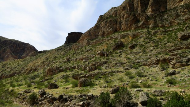 Scattered volcanic rock on canyon wall, Canal Trail, Hurricane Cliffs Recreation Area, Utah