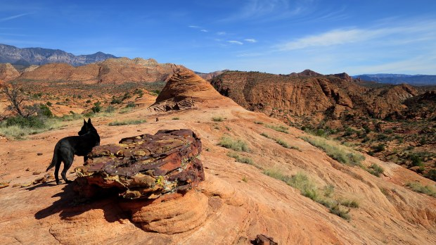 Liesegang rings on a deposited boulder atop petrified sand dunes, Red Cliffs National Conservation Area, Utah