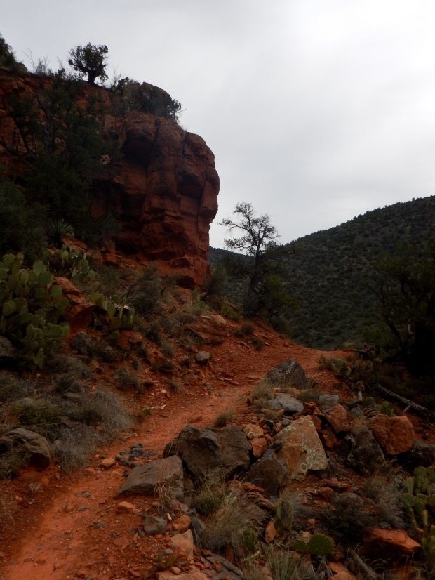 Bell Trail, Wet Beaver Wilderness, Coconino National Forest, Arizona