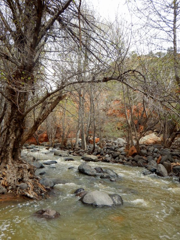 Wet Beaver Creek, Bell Trail, Wet Beaver Wilderness, Coconino National Forest, Arizona