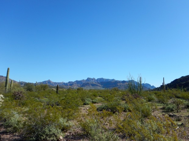View of the Ajo Mountains from Historic County Road Trail, Organ Pipe Cactus National Monument, Arizona