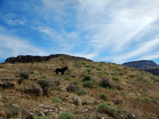 Crossing the mountain, Virgin River Canyon Recreation Area, Arizona
