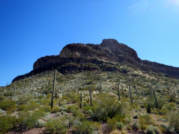 Ajo Mountain Drive, Organ Pipe Cactus National Monument, Arizona