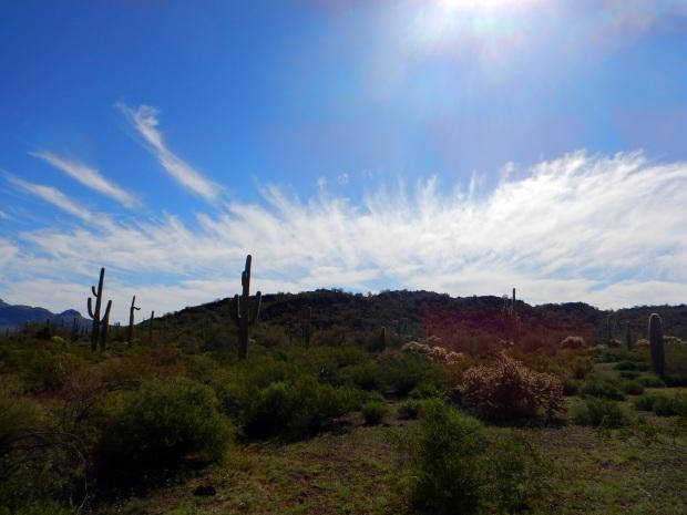 A walk through the desert near Tilloston Peak Wayside, Organ Pipe Cactus National Monument, Arizona