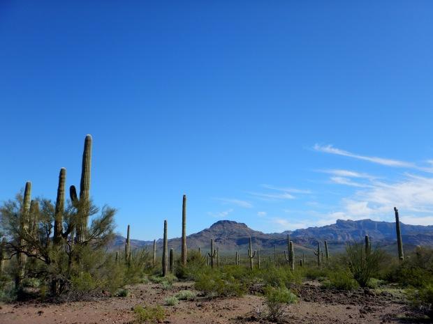 Near Tilloston Peak Wayside, Organ Pipe Cactus National Monument, Arizona