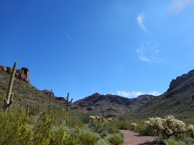 Alamo Canyon Trail, Organ Pipe Cactus National Monument, Arizona