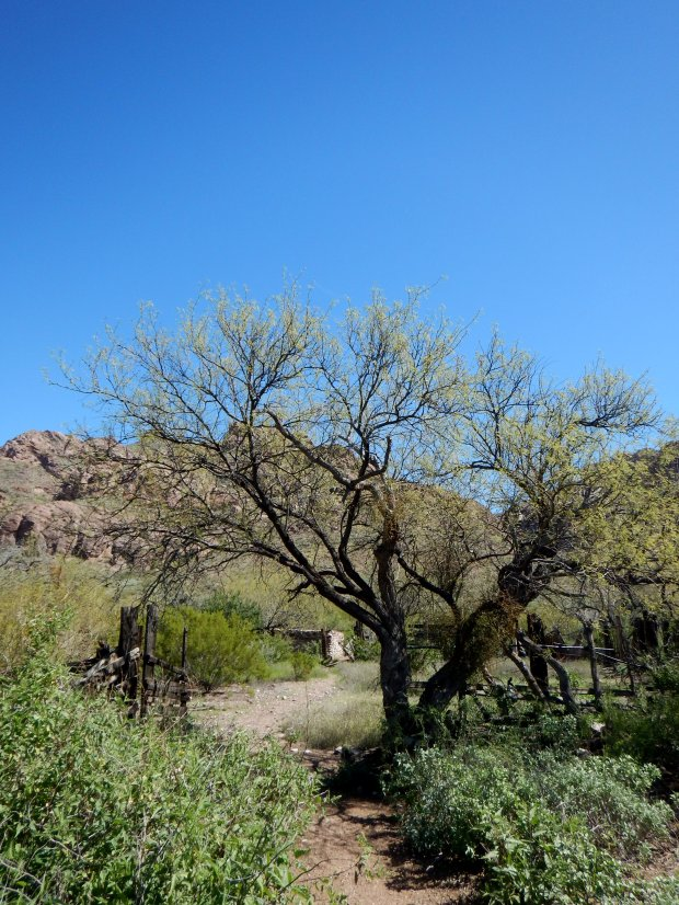 Corral at old ranch, Alamo Canyon Trail, Organ Pipe Cactus National Monument, Arizona