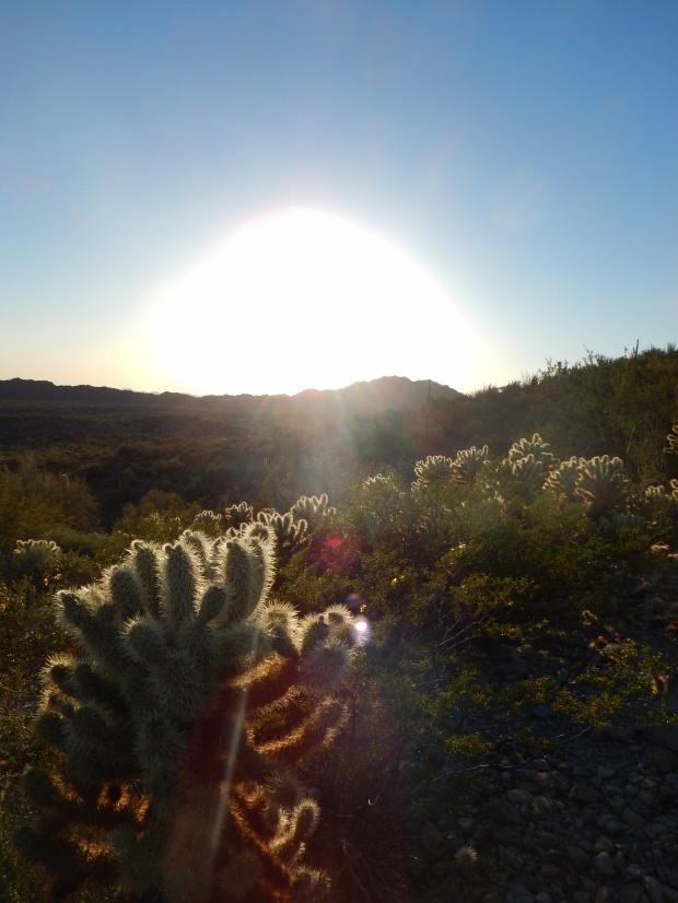 Top of the Desert View Trail a half hour before sundown, Organ Pipe Cactus National Monument, Arizona