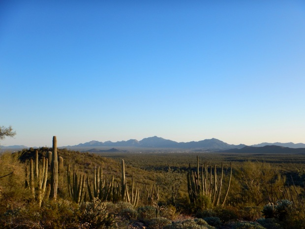 Ajo Mountains in the distance from Desert View Trail, Organ Pipe Cactus National Monument, Arizona
