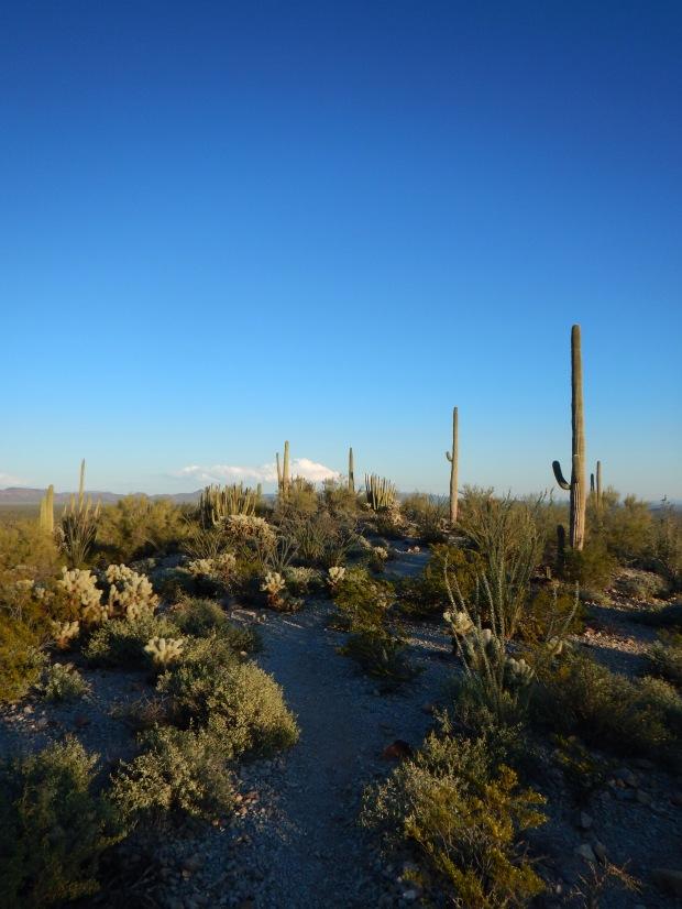 Top of the ridge, Desert View Trail, Organ Pipe Cactus National Monument, Arizona