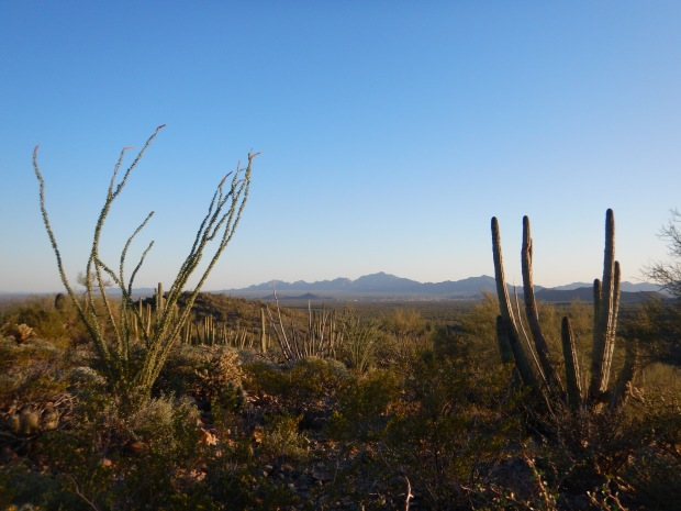 Along the ridge, Desert View Trail, Organ Pipe Cactus National Monument, Arizona