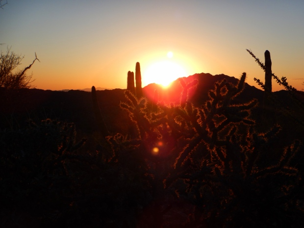 Sunset, Desert View Trail, Organ Pipe Cactus National Monument, Arizona