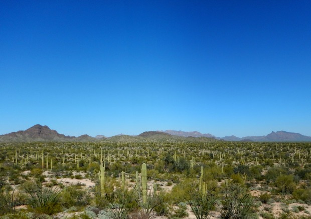 Looking out from near Victoria Mine, Victoria Mine Trail, Organ Pipe Cactus National Monument, Arizona