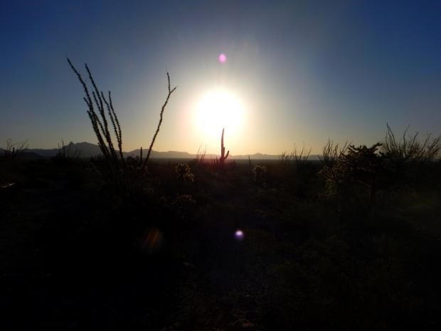 Sunrise on Palo Verde Trail, Organ Pipe Cactus National Monument, Arizona