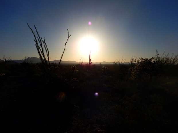 Sunrise on Palo Verde Trail, Organ Pipe Cactus National Monument, Arizona