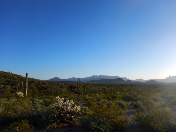 Palo Verde Trail, Organ Pipe Cactus National Monument, Arizona
