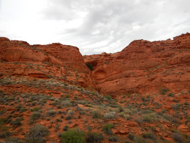 Cottonwood tree peaking out from the cliffs, Red Cliffs National Conservation Area, Utah