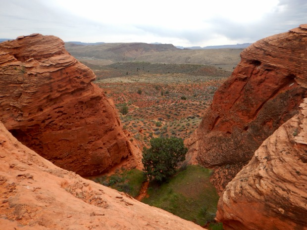 Looking down on the cottonwood that we saw from the base of the cliffs, Red Cliffs National Conservation Area, Utah