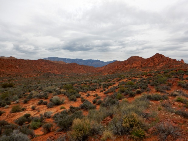 View across the mesa, Red Cliffs National Conservation Area, Utah