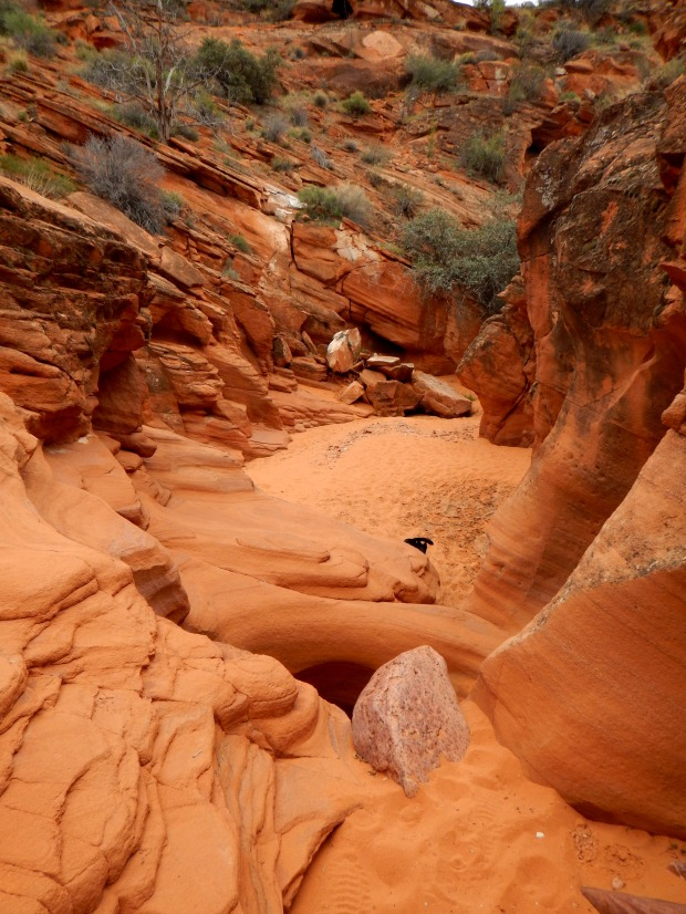 Speckled wash, Red Cliffs National Conservation Area, Utah